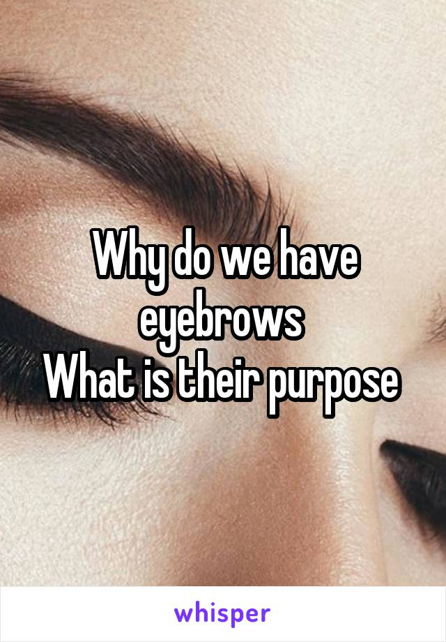 Why do we have eyebrows  What is their purpose