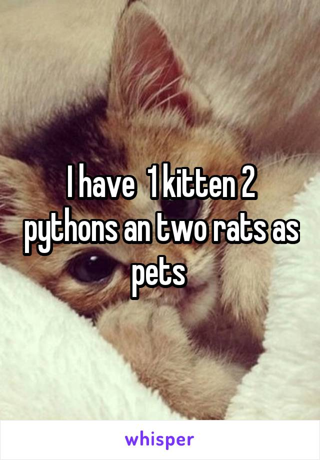 I have  1 kitten 2 pythons an two rats as pets