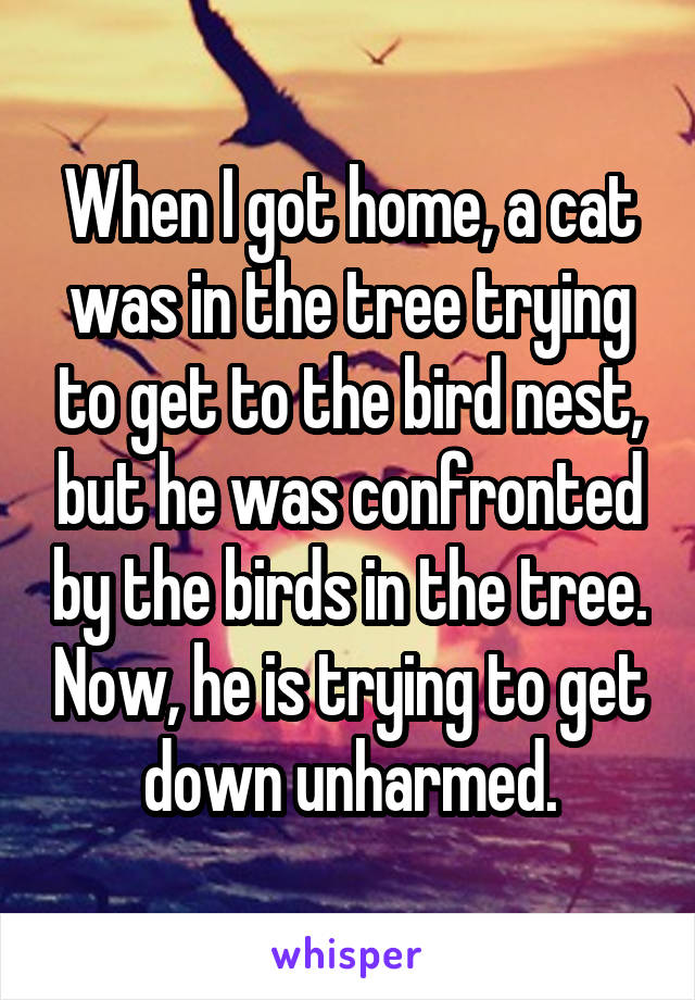 When I got home, a cat was in the tree trying to get to the bird nest, but he was confronted by the birds in the tree. Now, he is trying to get down unharmed.