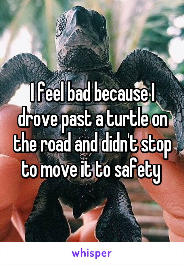 I feel bad because I drove past a turtle on the road and didn't stop to move it to safety