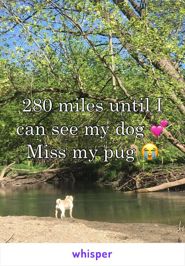 280 miles until I can see my dog 💕  Miss my pug 😭