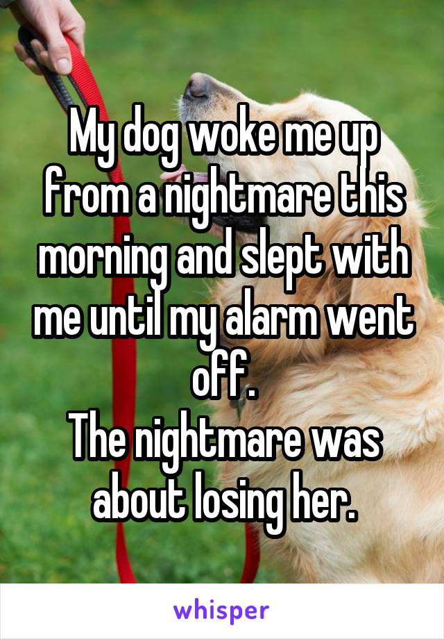 My dog woke me up from a nightmare this morning and slept with me until my alarm went off. The nightmare was about losing her.
