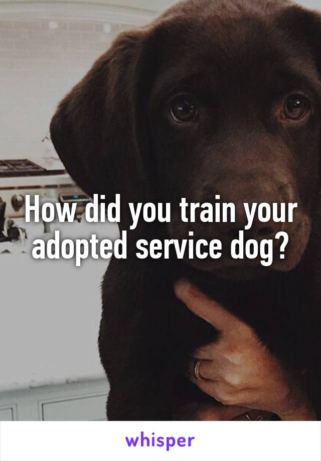 How did you train your adopted service dog?