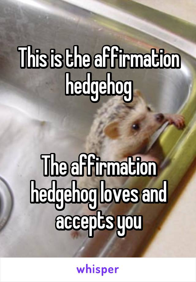 This is the affirmation hedgehog   The affirmation hedgehog loves and accepts you
