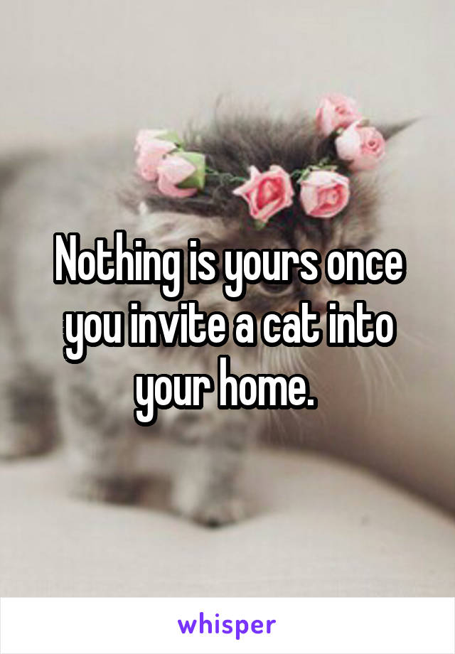 Nothing is yours once you invite a cat into your home.