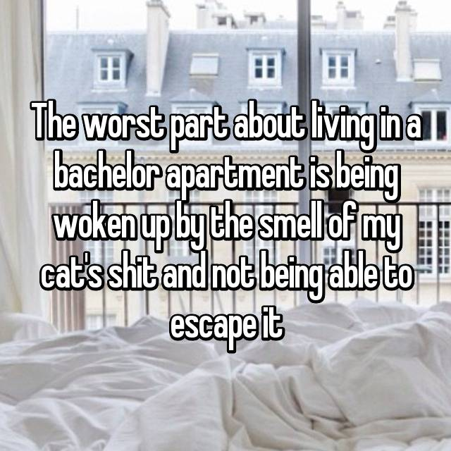 The worst part about living in a bachelor apartment is being woken up by the smell of my cat's shit and not being able to escape it 😷