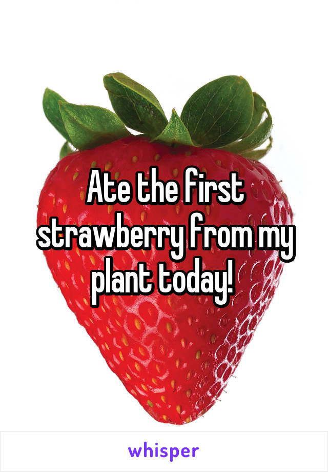 Ate the first strawberry from my plant today!