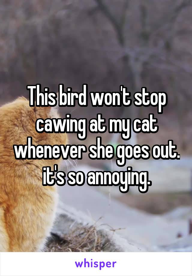 This bird won't stop cawing at my cat whenever she goes out.  it's so annoying.