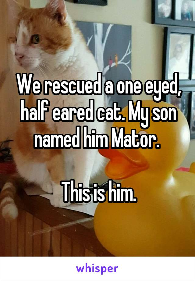 We rescued a one eyed, half eared cat. My son named him Mator.   This is him.