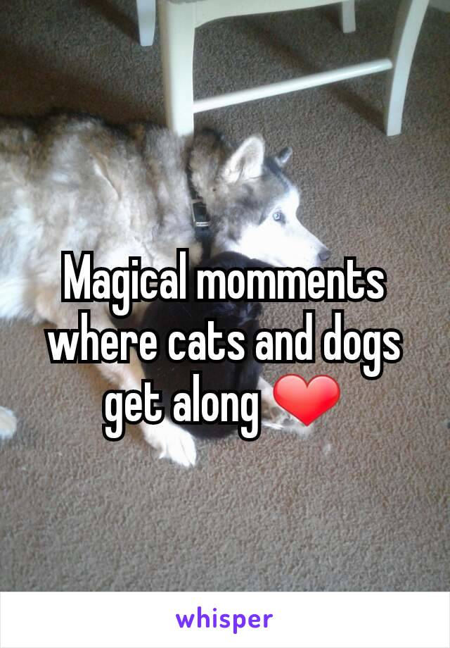 Magical momments where cats and dogs get along ❤