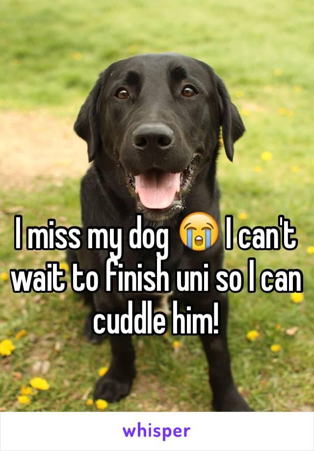 I miss my dog 😭 I can't wait to finish uni so I can cuddle him!
