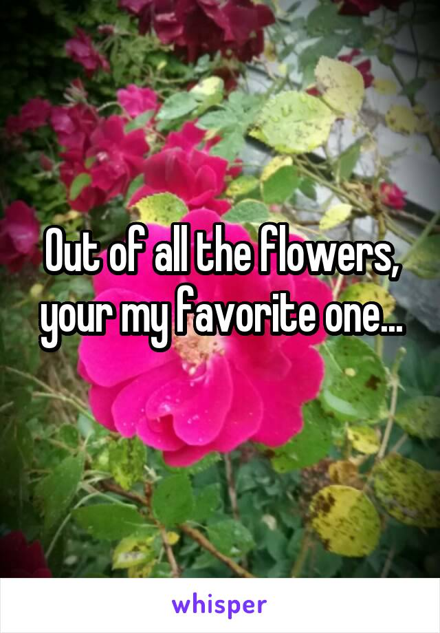 Out of all the flowers, your my favorite one...