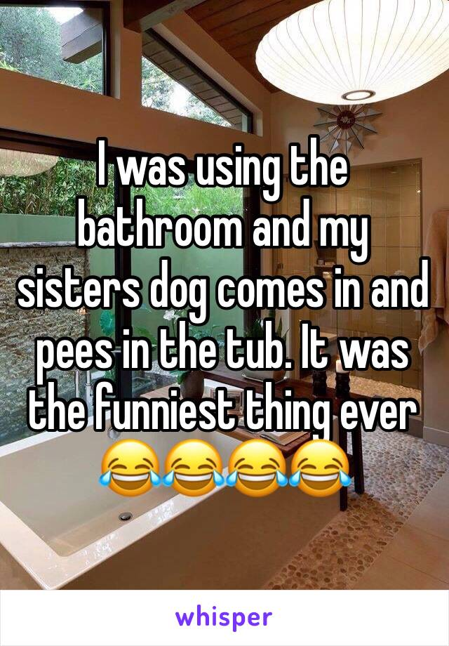 I was using the bathroom and my sisters dog comes in and pees in the tub. It was the funniest thing ever 😂😂😂😂