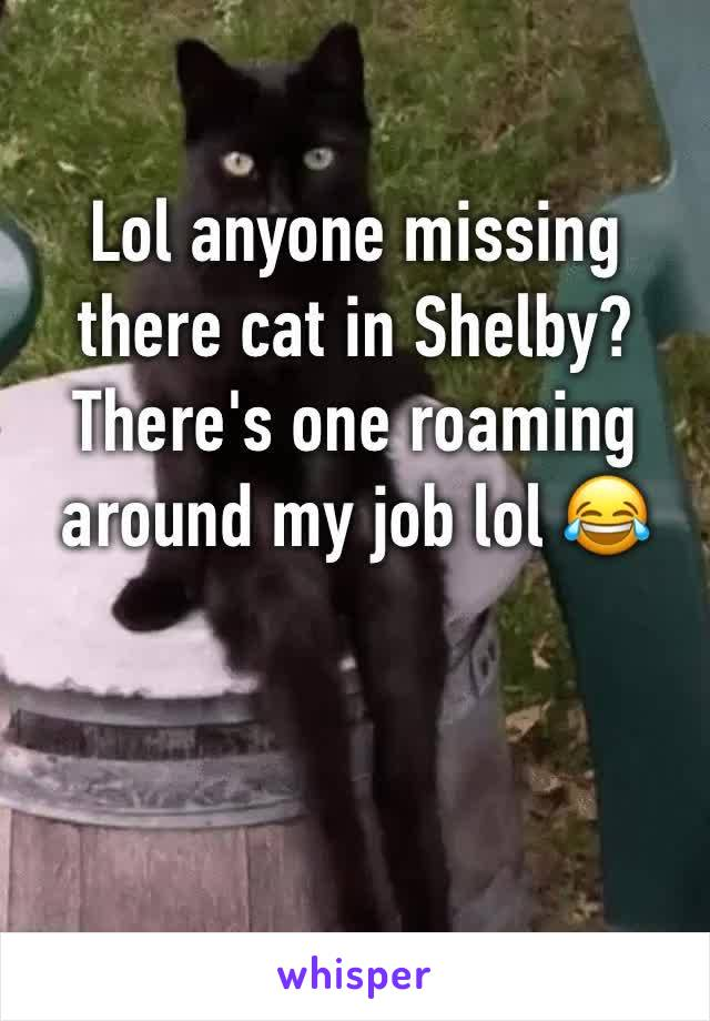 Lol anyone missing there cat in Shelby? There's one roaming around my job lol 😂