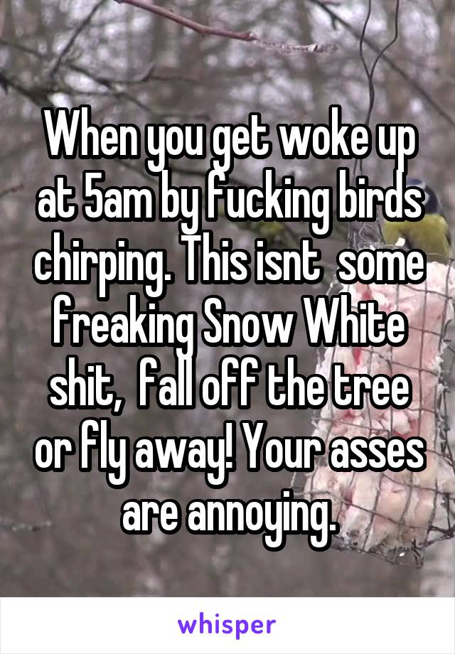 When you get woke up at 5am by fucking birds chirping. This isnt  some freaking Snow White shit,  fall off the tree or fly away! Your asses are annoying.