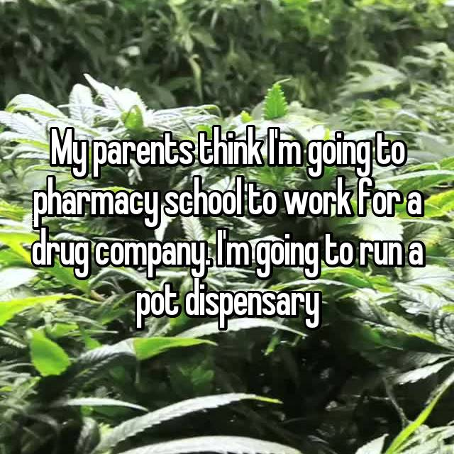 My parents think I'm going to pharmacy school to work for a drug company. I'm going to run a pot dispensary
