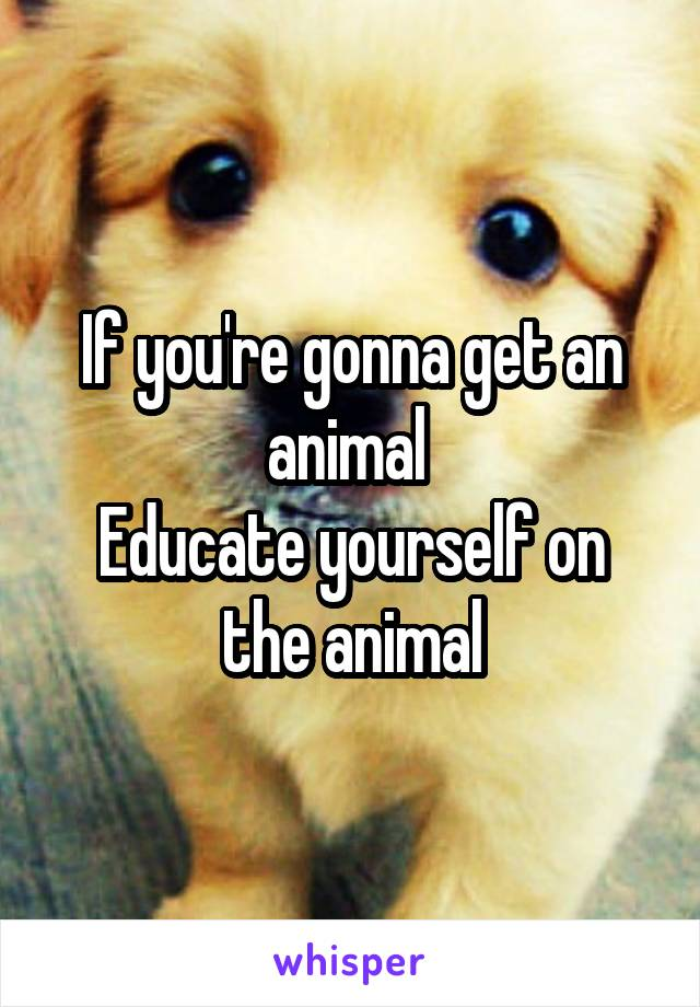 If you're gonna get an animal  Educate yourself on the animal