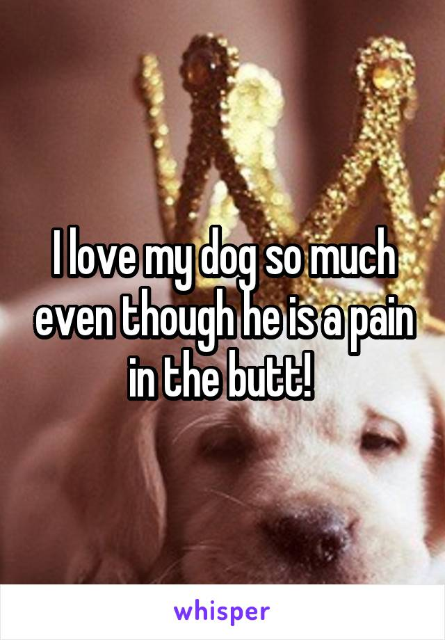 I love my dog so much even though he is a pain in the butt!