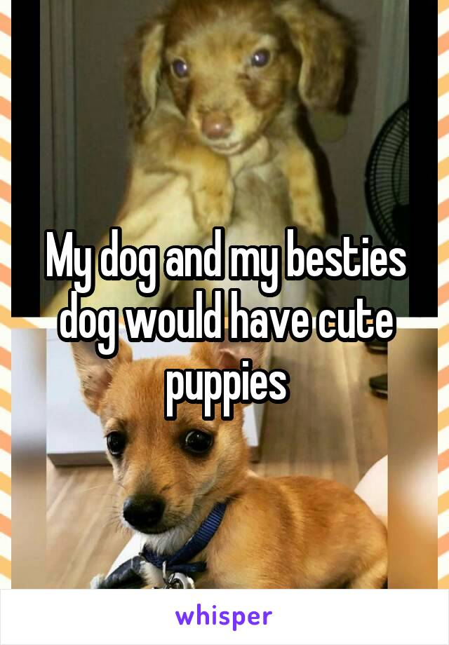 My dog and my besties dog would have cute puppies