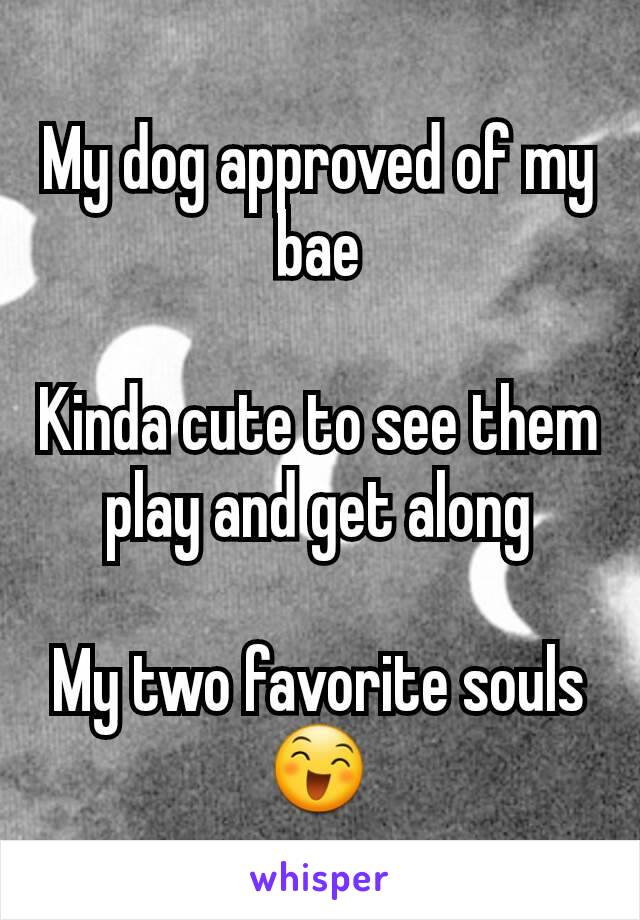 My dog approved of my bae  Kinda cute to see them play and get along  My two favorite souls 😄