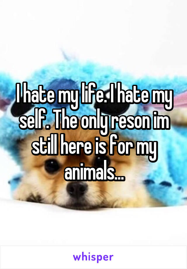 I hate my life. I hate my self. The only reson im still here is for my animals...
