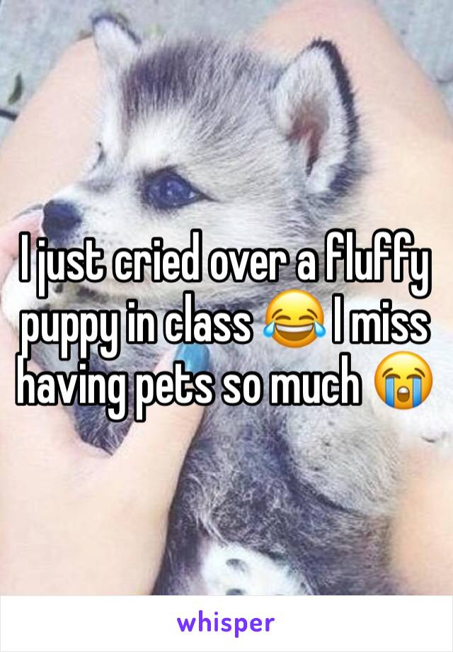 I just cried over a fluffy puppy in class 😂 I miss having pets so much 😭