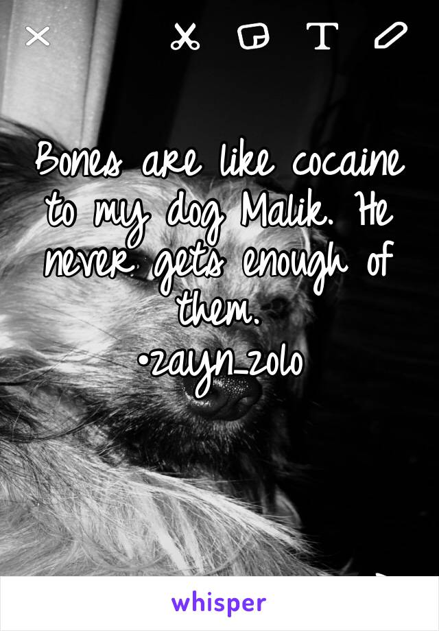 Bones are like cocaine to my dog Malik. He never gets enough of them. •zayn_zolo