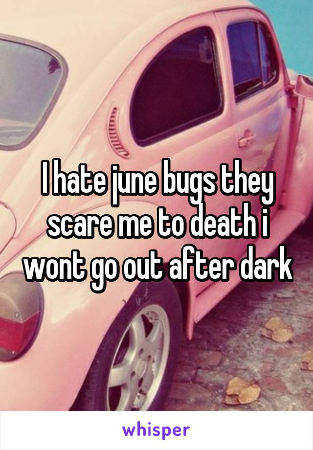 I hate june bugs they scare me to death i wont go out after dark