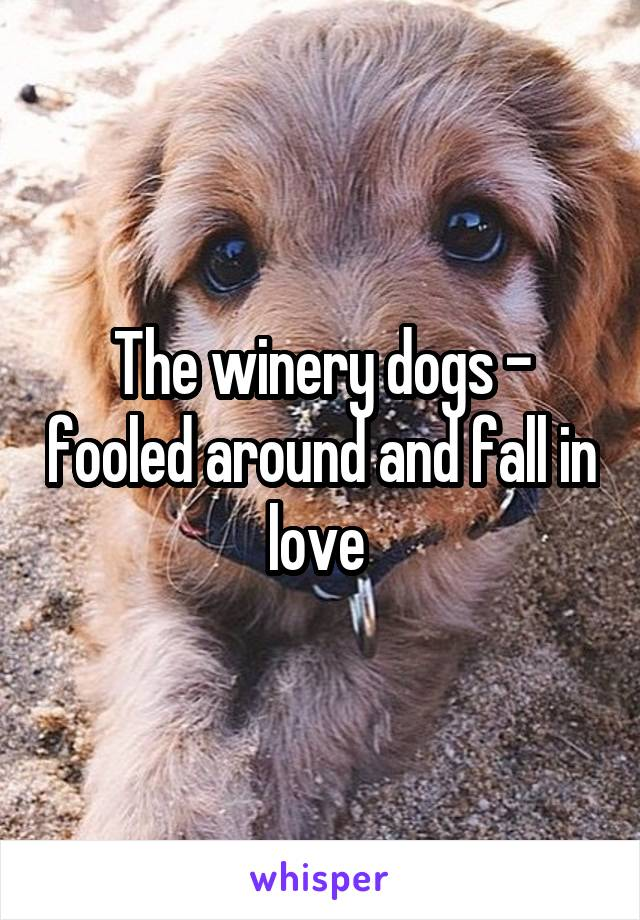 The winery dogs - fooled around and fall in love