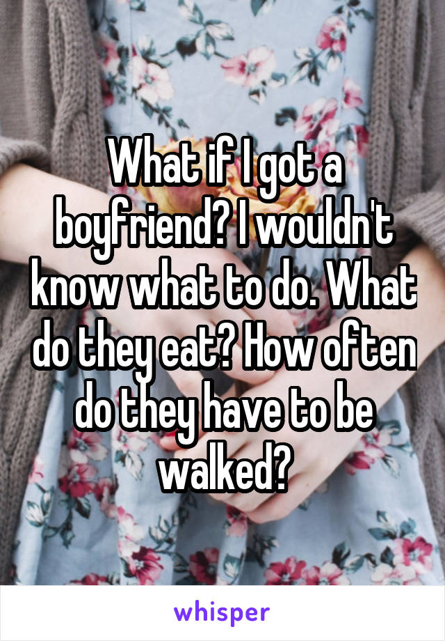 What if I got a boyfriend? I wouldn't know what to do. What do they eat? How often do they have to be walked?