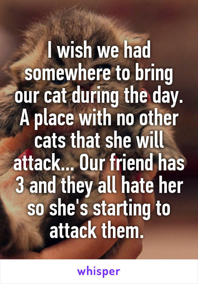 I wish we had somewhere to bring our cat during the day. A place with no other cats that she will attack... Our friend has 3 and they all hate her so she's starting to attack them.