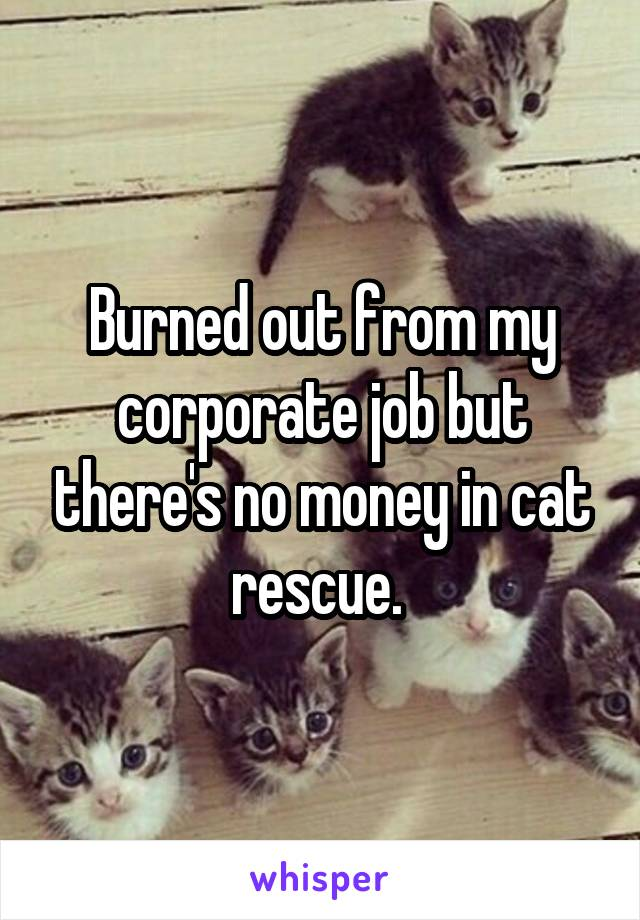 Burned out from my corporate job but there's no money in cat rescue.
