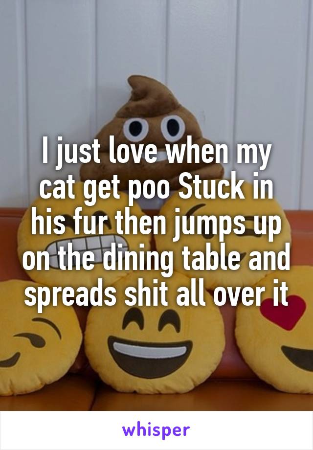 I just love when my cat get poo Stuck in his fur then jumps up on the dining table and spreads shit all over it