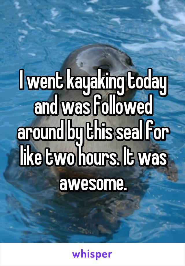 I went kayaking today and was followed around by this seal for like two hours. It was awesome.