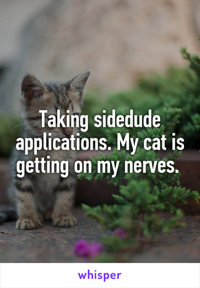 Taking sidedude applications. My cat is getting on my nerves.
