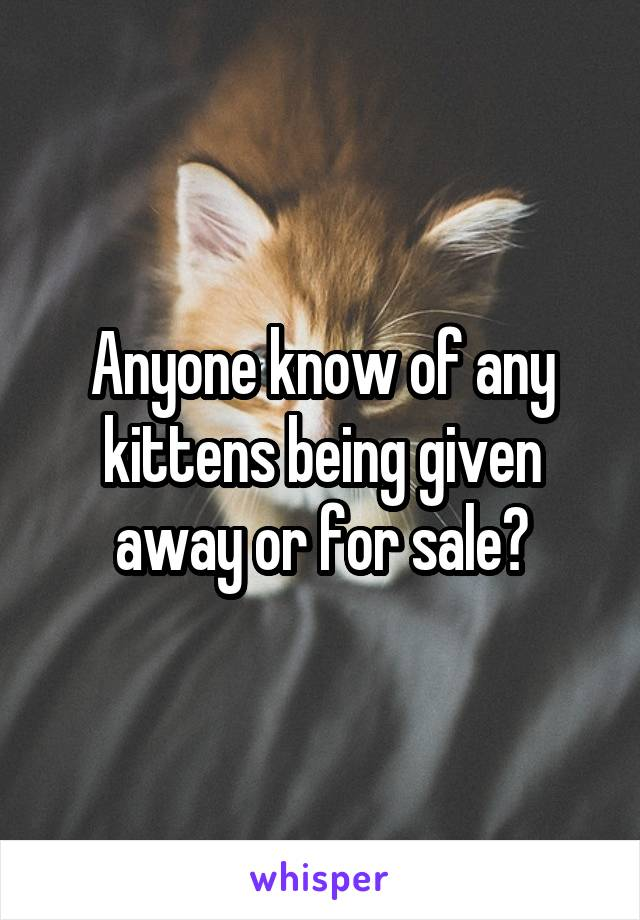 Anyone know of any kittens being given away or for sale?