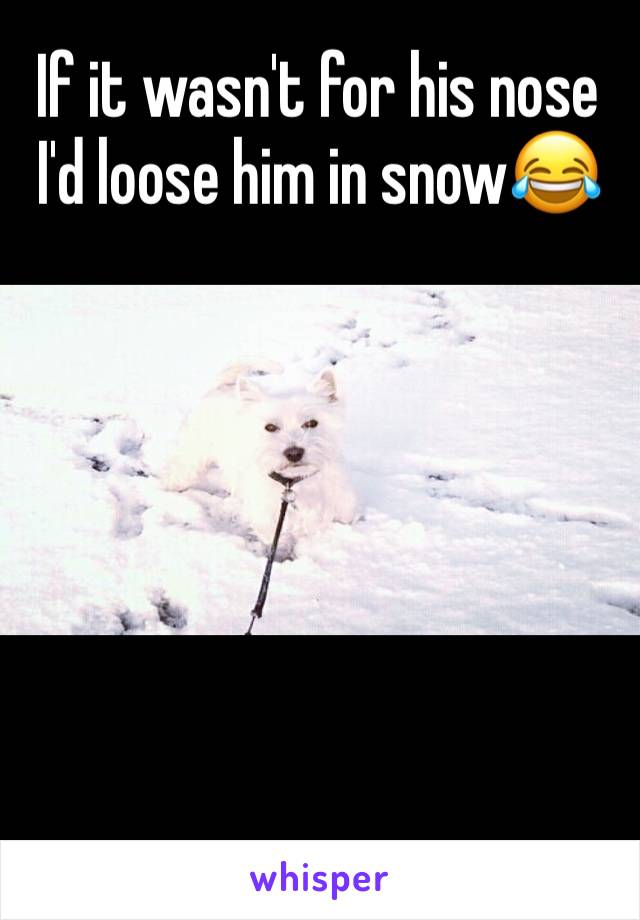 If it wasn't for his nose I'd loose him in snow😂