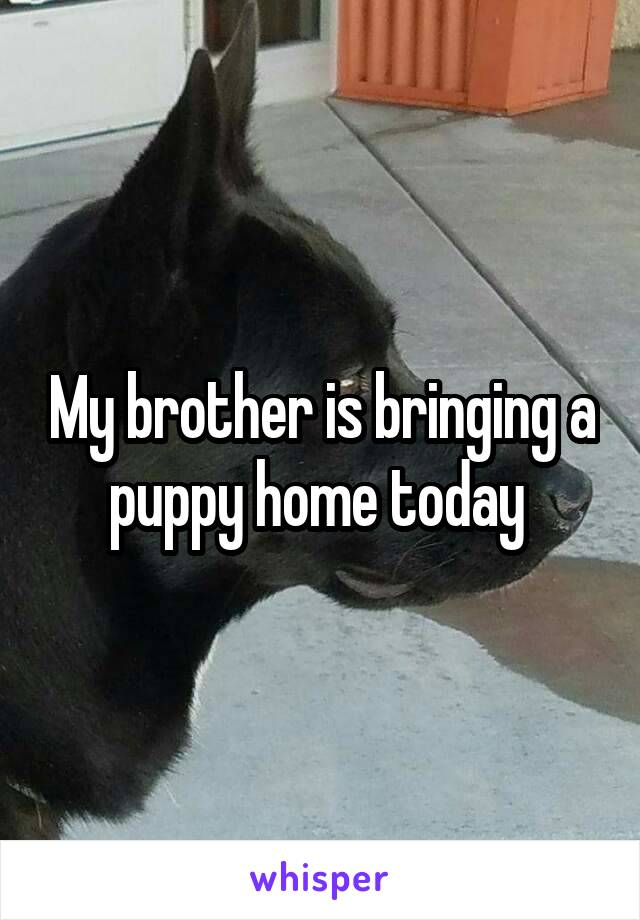 My brother is bringing a puppy home today