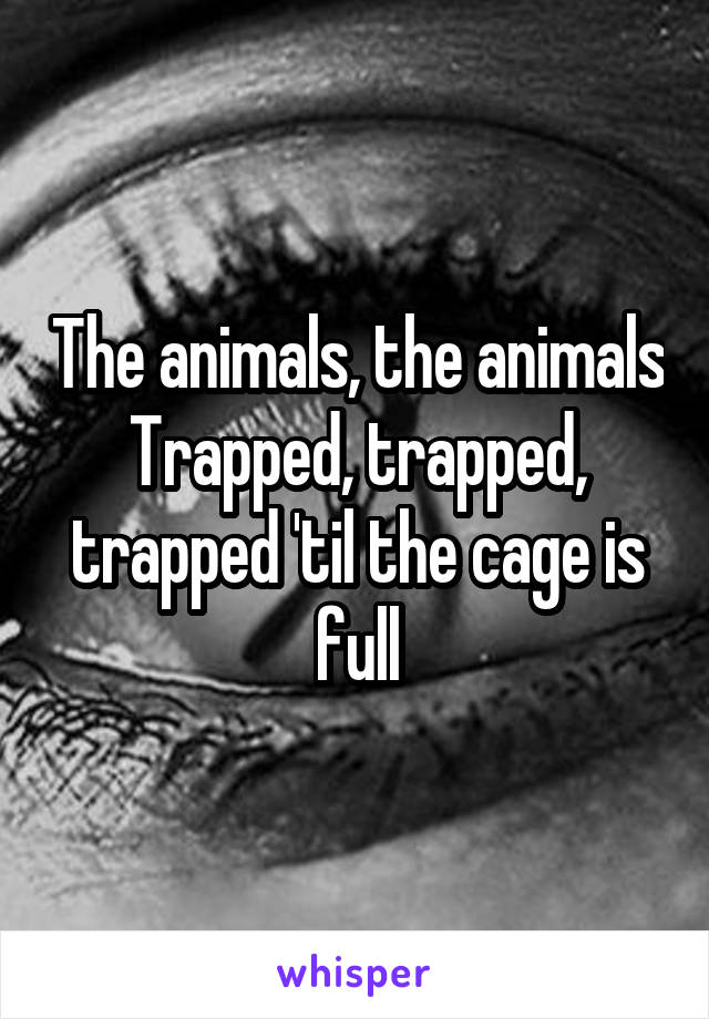 The animals, the animals Trapped, trapped, trapped 'til the cage is full