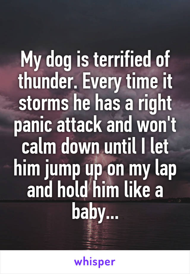 My dog is terrified of thunder. Every time it storms he has a right panic attack and won't calm down until I let him jump up on my lap and hold him like a baby...