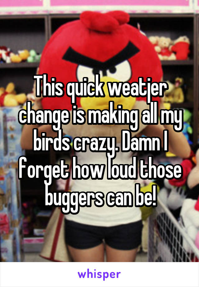This quick weatjer change is making all my birds crazy. Damn I forget how loud those buggers can be!