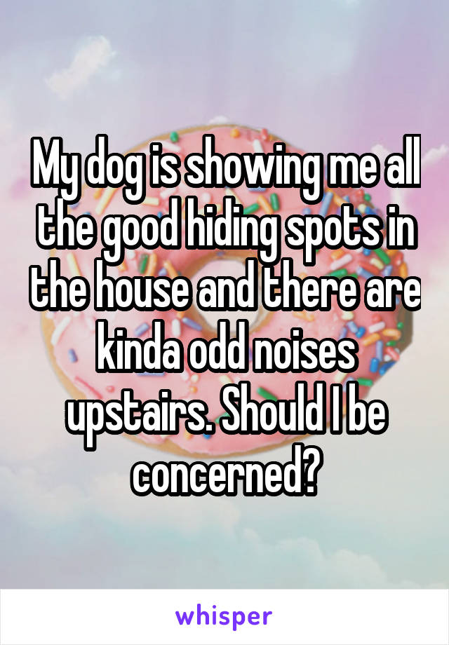 My dog is showing me all the good hiding spots in the house and there are kinda odd noises upstairs. Should I be concerned?
