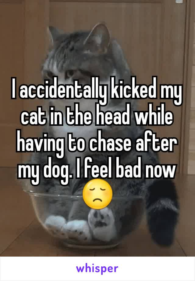 I accidentally kicked my cat in the head while having to chase after my dog. I feel bad now 😞