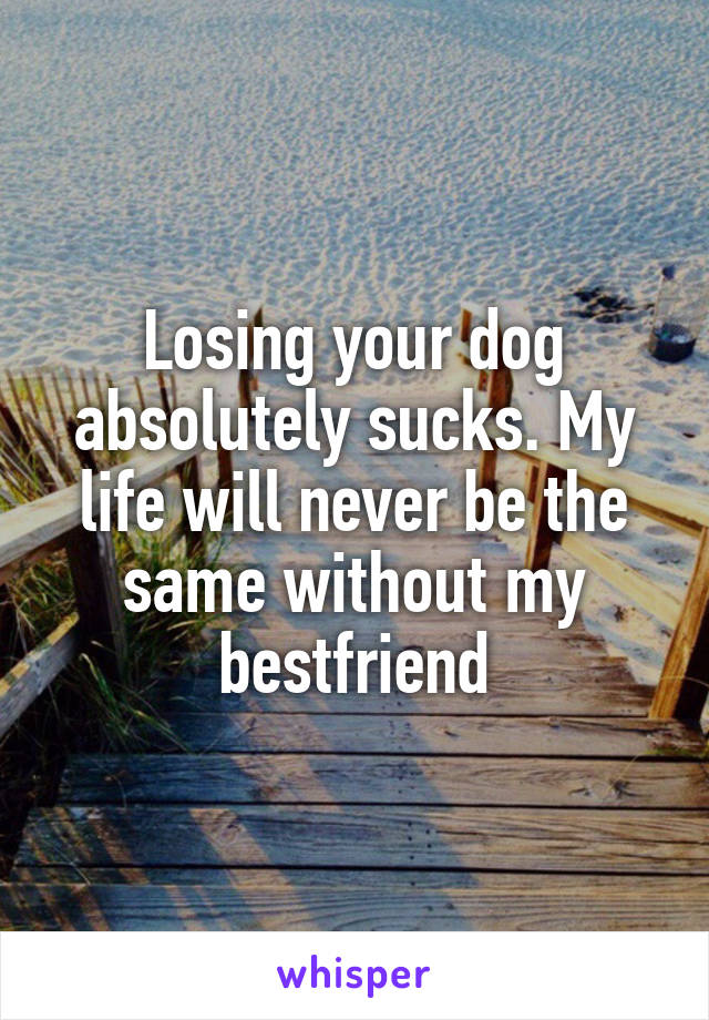 Losing your dog absolutely sucks. My life will never be the same without my bestfriend