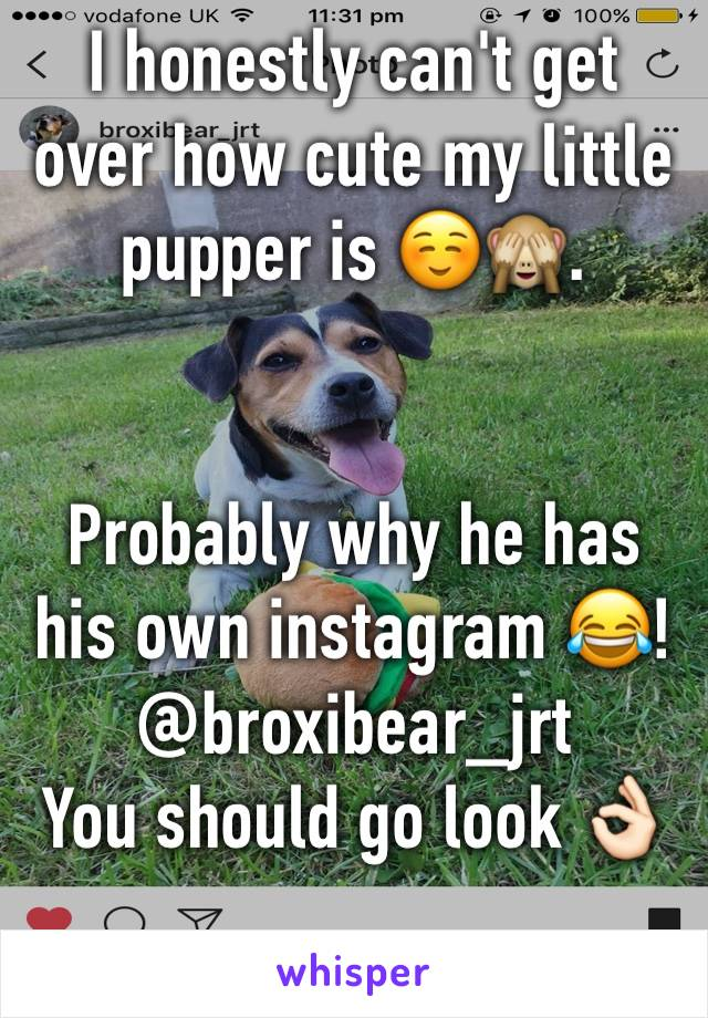 I honestly can't get over how cute my little pupper is ☺️🙈.   Probably why he has his own instagram 😂! @broxibear_jrt You should go look 👌🏻