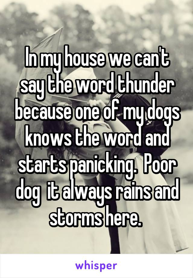 In my house we can't say the word thunder because one of my dogs knows the word and starts panicking.  Poor dog  it always rains and storms here.