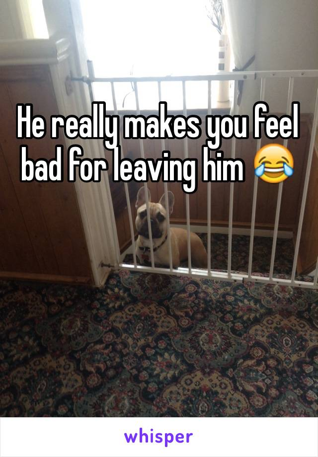 He really makes you feel bad for leaving him 😂