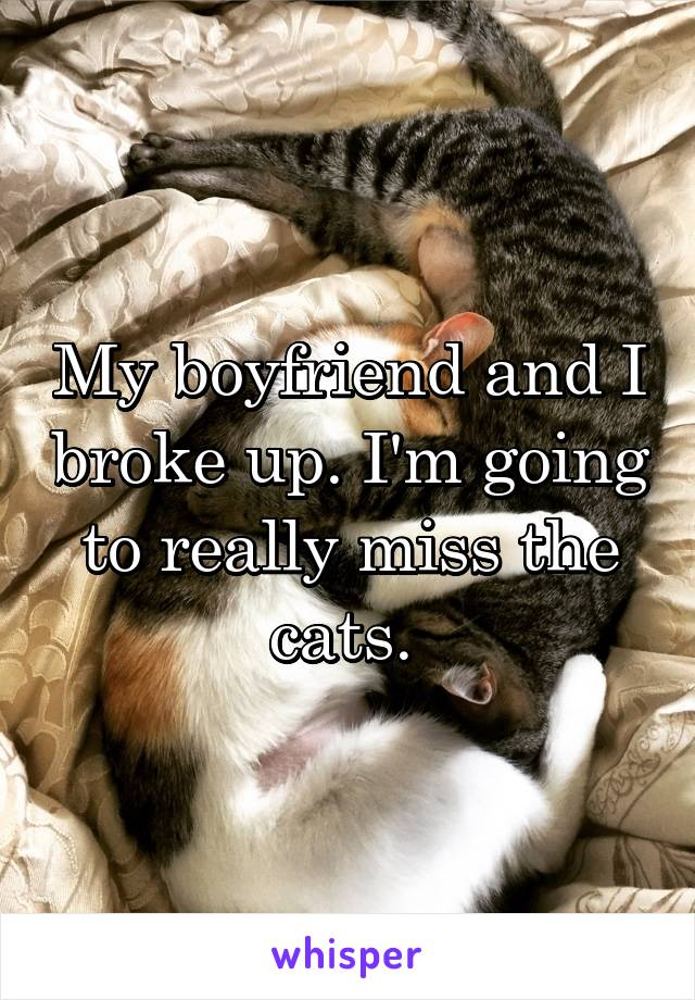 My boyfriend and I broke up. I'm going to really miss the cats.