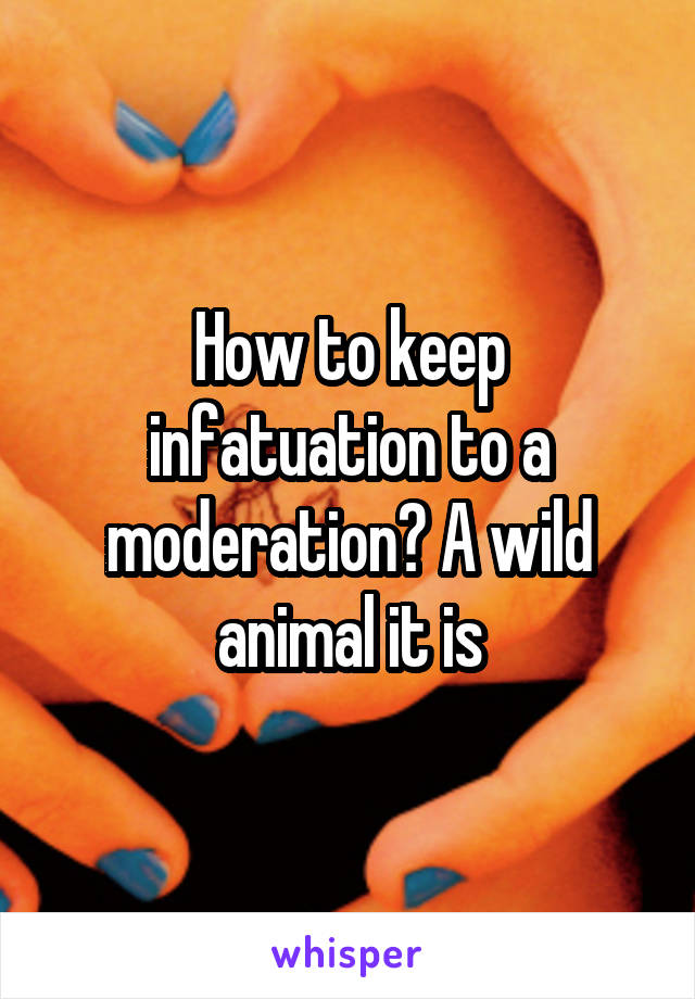 How to keep infatuation to a moderation? A wild animal it is