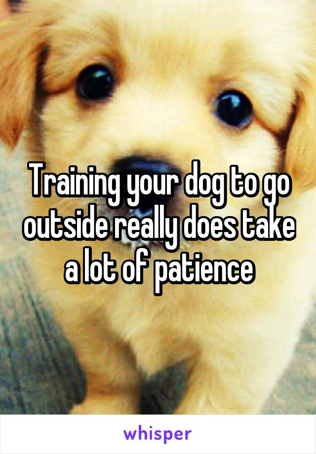 Training your dog to go outside really does take a lot of patience